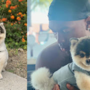 OFFICIAL: Daniel Sturridge's Dog Has Been Returned To Him
