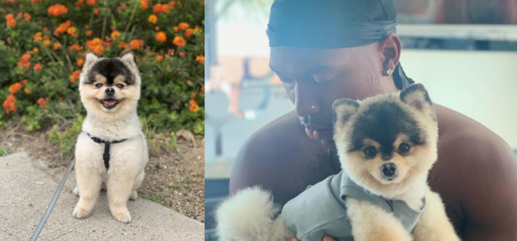 OFFICIAL: Daniel Sturridge's Dog Has Been Returned To Him